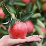 frutas síndrome do intestino irritável